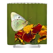 Clouded Sulphur Butterfly Shower Curtain