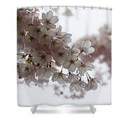 Clouds Of Soft Pink Blossoms - A Tribute To Spring Shower Curtain