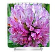 Clover Flower Upclose Shower Curtain