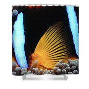 Clownfish 1 Shower Curtain