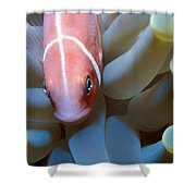 Clownfish 16 Shower Curtain