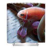 Clownfish 17 Shower Curtain