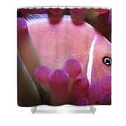 Clownfish 2 Shower Curtain