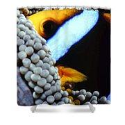 Clownfish 7 Shower Curtain