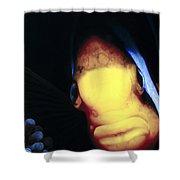 Clownfish 8 Shower Curtain