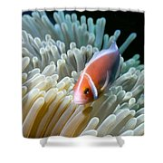 Clownfish 9 Shower Curtain by Dawn Eshelman