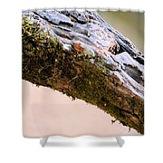 Club Of Moss Abstract Shower Curtain