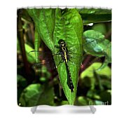 Club Tailed Dragonfly Shower Curtain