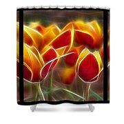 Cluisiana Tulips Triptych  Shower Curtain by Peter Piatt