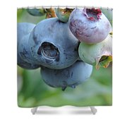 Clump Of Blueberries 2 Shower Curtain