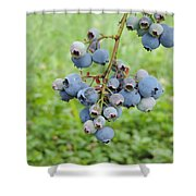 Clump Of Blueberries 3 Shower Curtain