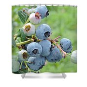 Clump Of Blueberries Shower Curtain