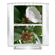 Clusia Rosea - Clusia Major - Autograph Tree - Maui Hawaii Shower Curtain by Sharon Mau