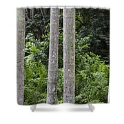 Cluster Shower Curtain