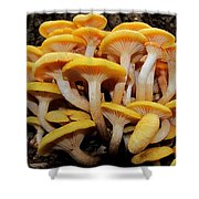 Cluster Fungi Shower Curtain