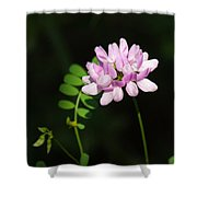 Cluster Of Crown Vetch Shower Curtain