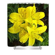 Cluster Of Yellow Lilly Flowers In The Garden Shower Curtain