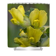 Clustered Broom Close Up Shower Curtain