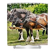 Clydesdale Horses Shower Curtain