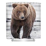 Coastal Brown Bear A Walk On The Beach Shower Curtain