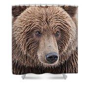 Coastal Brown Bear Closeup Shower Curtain