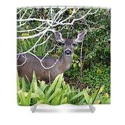 Coastal Deer Shower Curtain