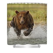 Coastal Grizzly Boar Fishing Shower Curtain by Kent Fredriksson
