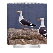 Coastal Seagulls Shower Curtain