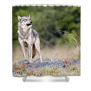Coastal Wolf Shower Curtain