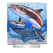 Cobia On Rays Shower Curtain by Carey Chen