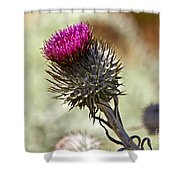 Cobwebby Thistle Shower Curtain