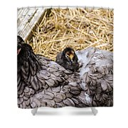 Cochin Hen And Chick Shower Curtain