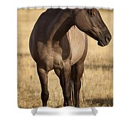 Cochise Shower Curtain