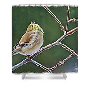 Cock-a-doodle-doo Gold Finch  Shower Curtain