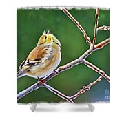 Cock-a-doodle Doo Gold Finch - Digital Paint Shower Curtain