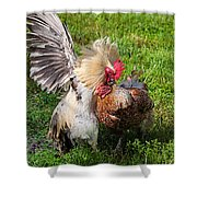 Cock Fight Shower Curtain