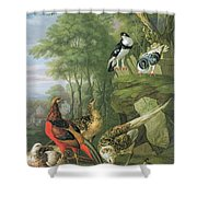 Cock Pheasant Hen Pheasant And Chicks And Other Birds In A Classical Landscape Shower Curtain