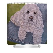 Cockapoo Shower Curtain