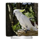 Cockatoo White Parrot Shower Curtain