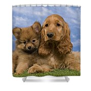 Cocker Spaniel And Pomeranian Shower Curtain