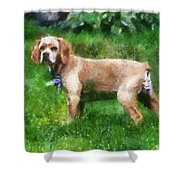 Cocker Spaniel Outside 07 Shower Curtain