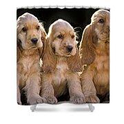 Cocker Spaniel Puppies Shower Curtain