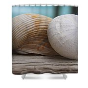 Cockle And Sea Urchin Shower Curtain