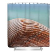 Cockle Shell Shower Curtain