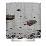 Cockle Shells On Little Island Shower Curtain