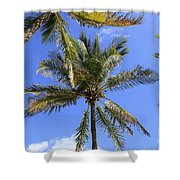 Cocoanut Palm Trees Sky Background Shower Curtain