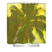 Coconut Palm Shower Curtain