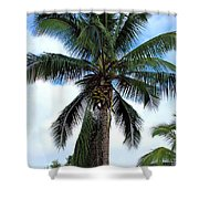 Coconut Palm Tree Shower Curtain