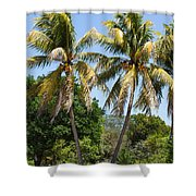 Coconut Palm Trees In Key West Shower Curtain