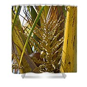 Coconut Shoot Shower Curtain